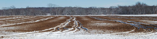 manure on snow picture