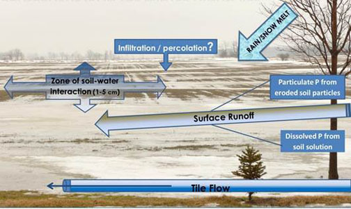 Figure 1. Phosphorus in Winter Landscape